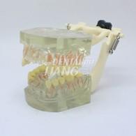Transparent Model DM 105 #HL-60105