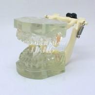 Transparent Model DM 107 #HL-60107