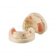 Implant Training B #HL-60042